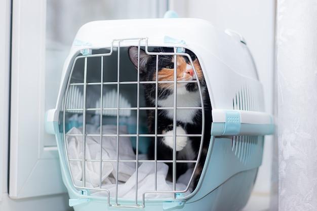 Кошка сидит в переноске для животных. домашнее животное. перевозка животных. перевозка животных. взрослая черепаховая кошка.