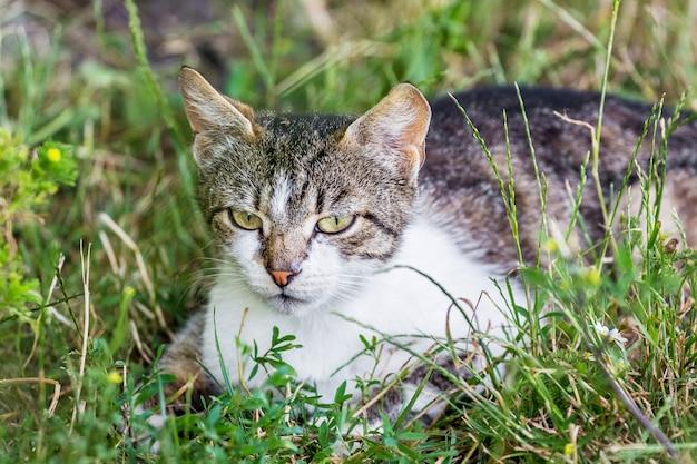 猫は草の中に座って戦利品を追跡します