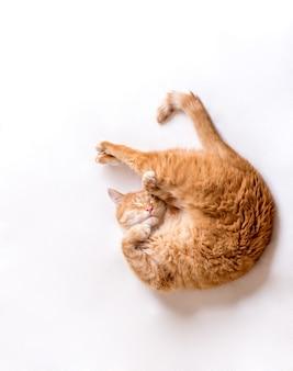 Кошка спит в неудобной позе. забавный кот лежит на белом одеяле. кот прижал лапы к морде. место для текста, светлый фон. горизонтальное фото.