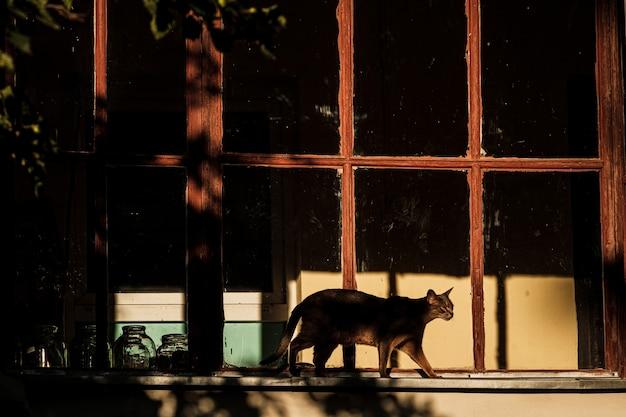 Кошка ходит по подоконнику за окном