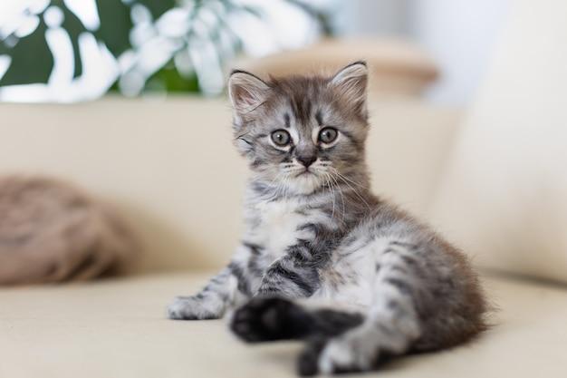 Кошка с котенком лежат на диване.