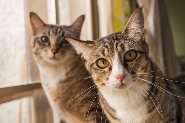 猫たちは何が先にあるのかと思っていて、かわいく見えます。
