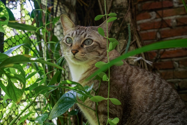 このように猫はとてもかわいく見えます。