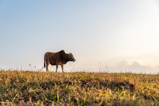 Скот на лугу ест траву