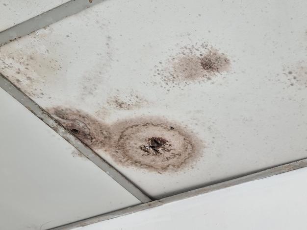 天井はカビの生えた壁パネルです