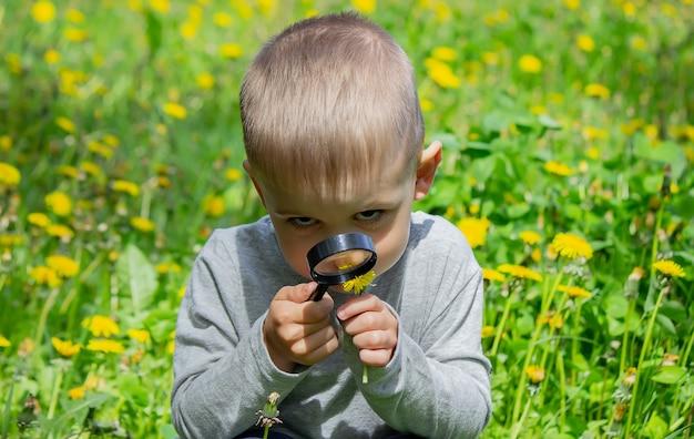 아이는 돋보기에서 꽃을 검사합니다. 자연. 선택적 초점