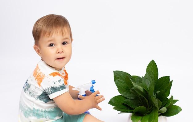 子供は屋内植物の世話をするのを手伝います