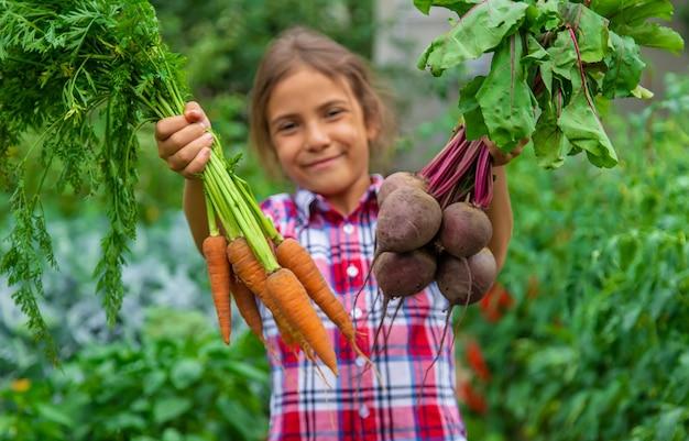 아이는 정원에서 손에 사탕무와 당근을 들고 있습니다. 선택적 초점입니다. 음식.