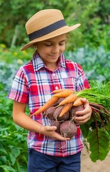 В саду ребенок держит в руках свеклу и морковь. выборочный фокус.