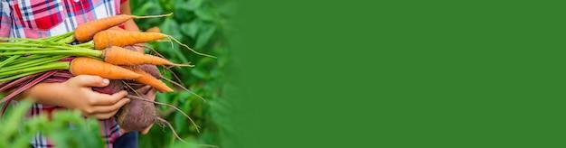 子供は庭でビートとニンジンを手に持っています。セレクティブフォーカス。