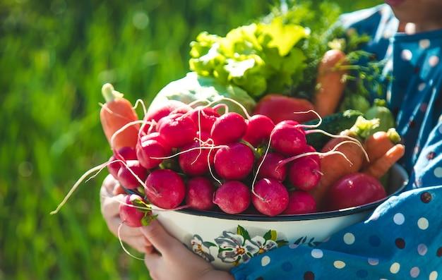아이는 정원에서 수확 한 많은 채소를 손에 쥐고 있습니다.