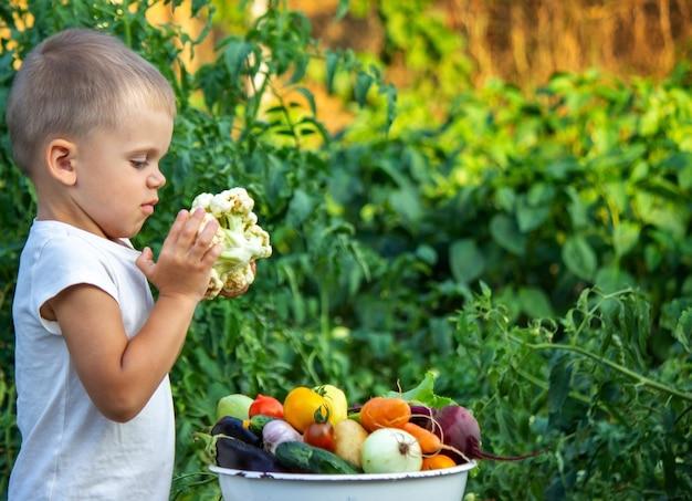 아이는 정보 야채를 손에 들고 있습니다. 농장에서 그릇에 야채입니다. 농장에서 유기농 제품입니다. 선택적 초점입니다. 자연
