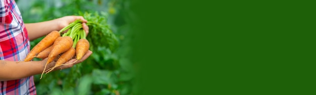 아이는 정원에서 손에 당근을 들고 있습니다. 선택적 초점입니다.