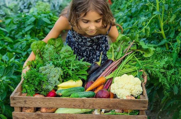 子供は庭で野菜を手に持っています。セレクティブフォーカス。自然。