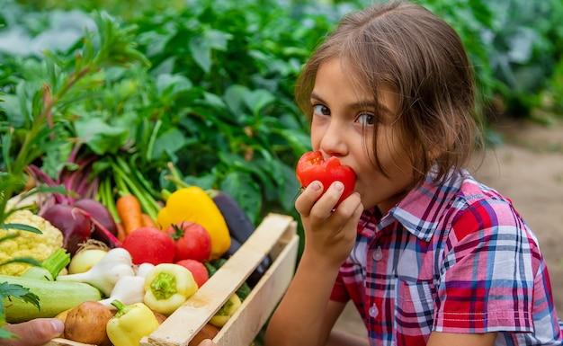 Ребенок держит в руках овощи в саду. выборочный фокус. природа.