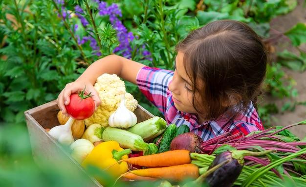 子供は庭で野菜を手に持っています。セレクティブフォーカス。