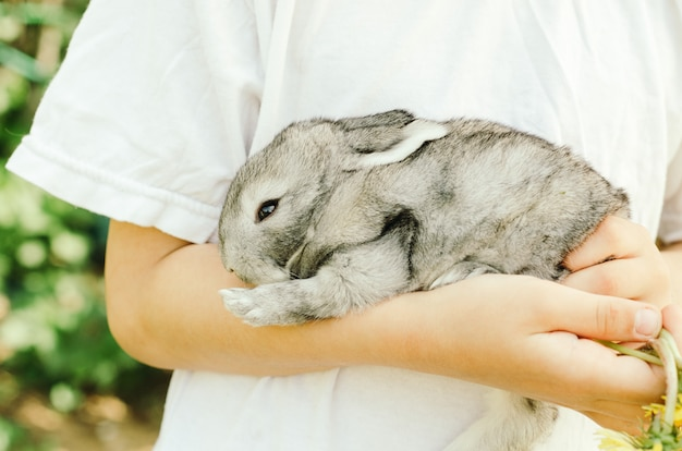 子供は緑の手に灰色の小さなウサギを持っています。