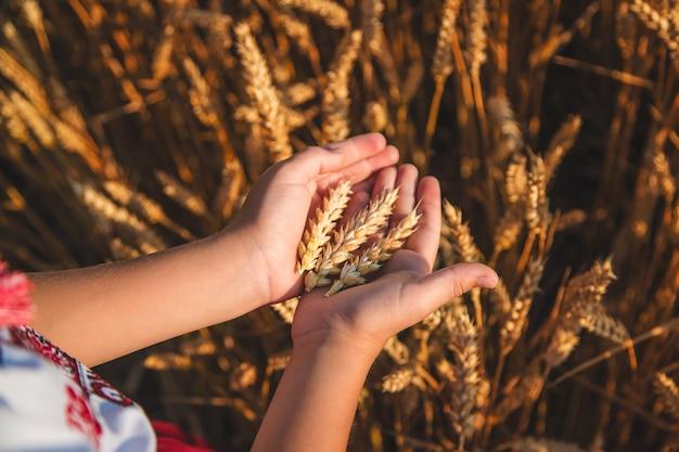 子供は小麦の穂を手に持っています。セレクティブフォーカス。