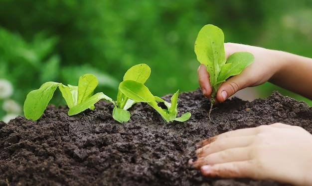 Ребенок сажает растение в саду