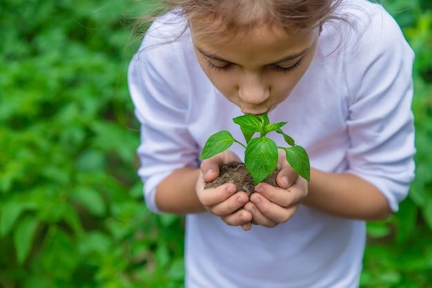 Ребенок сажает саженцы в саду