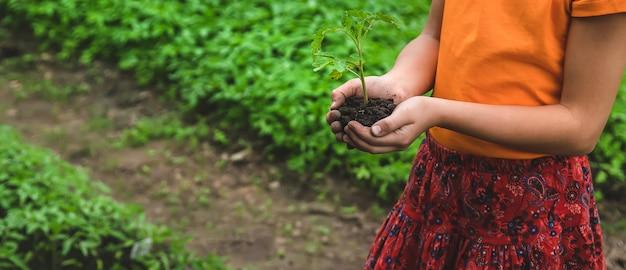 아이는 정원에 토마토 식물을 심습니다.