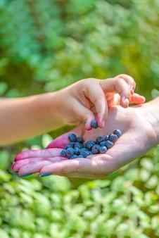 子供は大人と子供の手の森のクローズアップで彼の手でブルーベリーを取ります