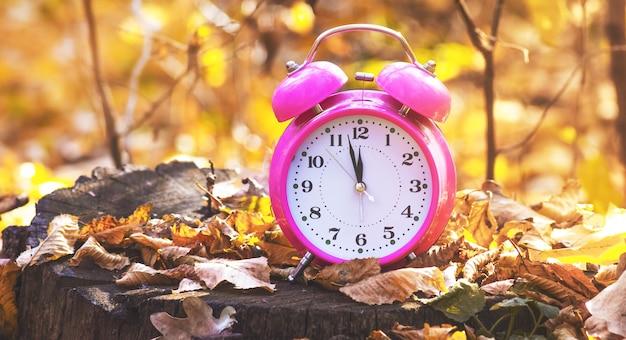 晴天時の黄色い葉の切り株にある秋の森の時計-