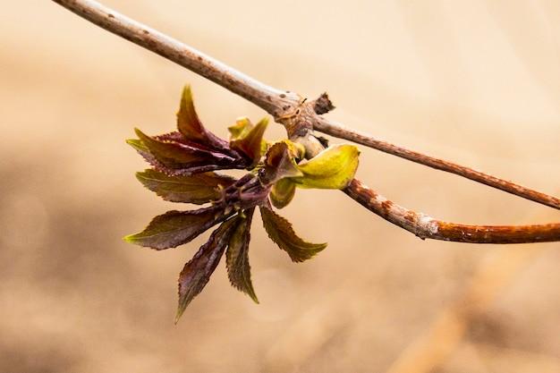 나뭇가지 끝에 열리는 잎사귀의 클로즈업. 오프닝 버드.