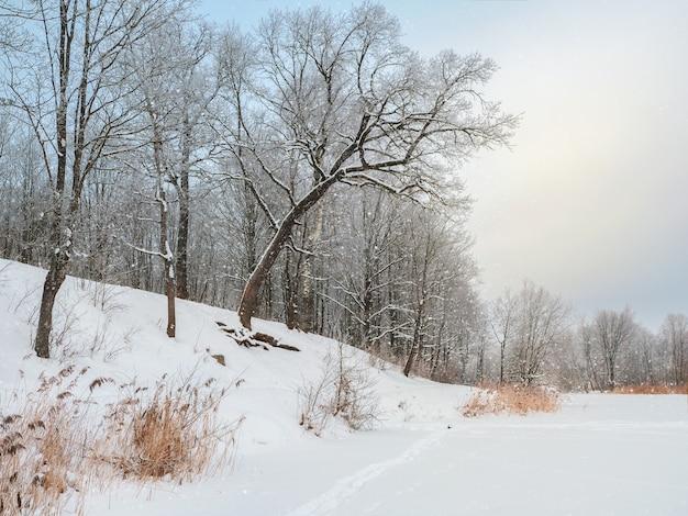 美しい傾いた木々がある雪に覆われた湖の海岸線。冬の雪の風景。