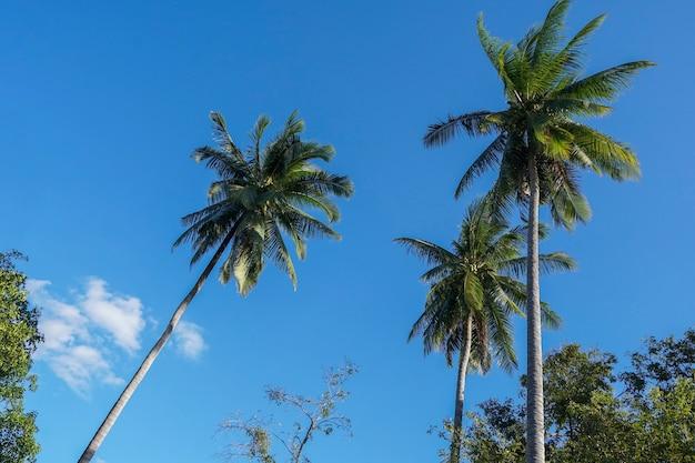 Кокосовые пальмы и небо днем