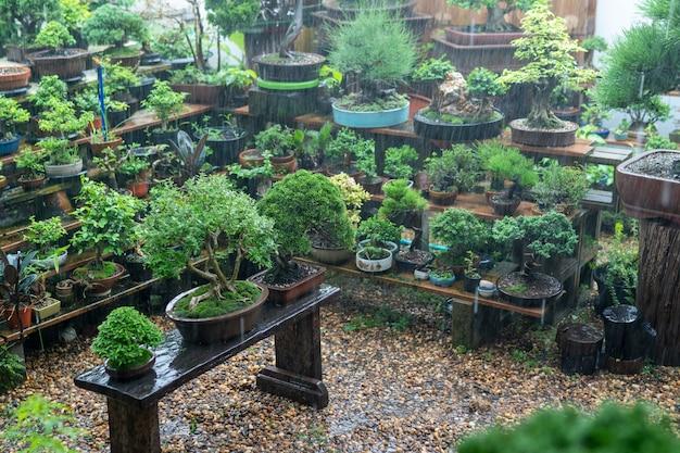 コレクターの盆栽は雨が降っています。
