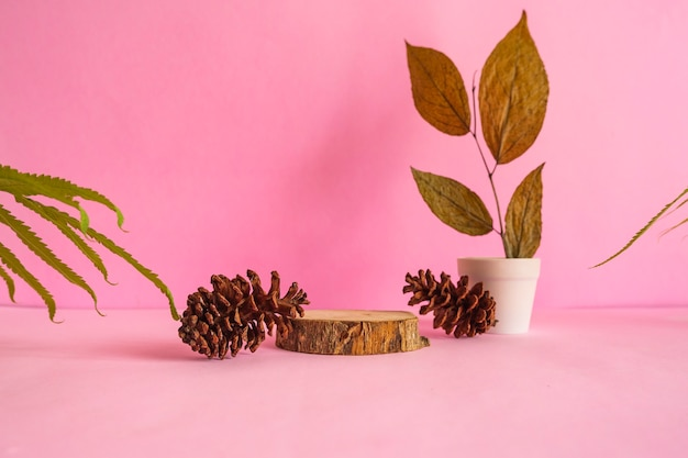 구성은 여름 제품을 특징으로 합니다. 말린 잎 장식이 있는 분홍색 배경의 둥근 나무.