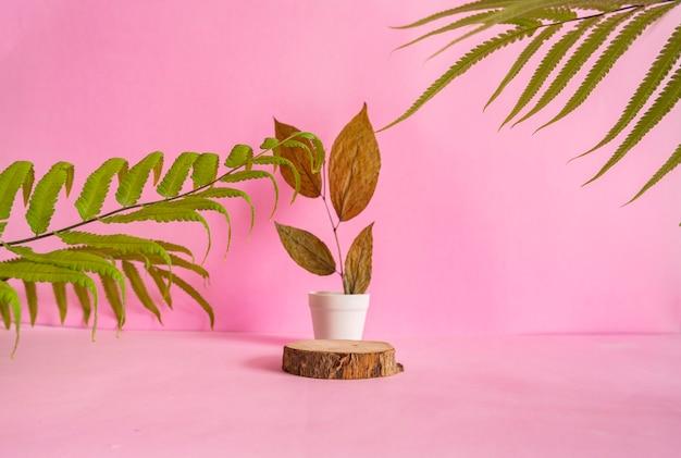이 구성은 말린 잎 장식이 있는 분홍색 배경에 여름 제품둥근 나무를 특징으로 합니다.