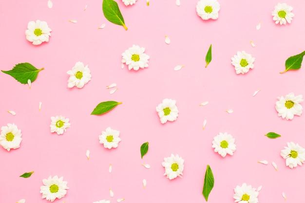 花の構成。白い背景の上の乾燥したピンクの花のフレーム。フラットサンベッド、上面図、コピースペース