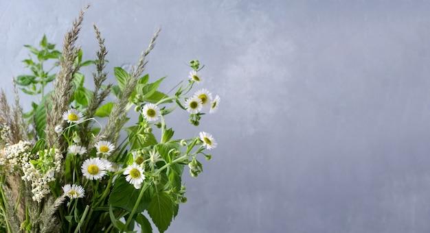 植物の夏の背景の概念。野草、ヒナギク、コピースペースのある灰色の背景にメリサ、父の日、母の日、こんにちは夏