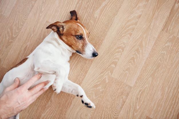 動物の世話の概念-犬をなでる男。ポケットの中の雑草
