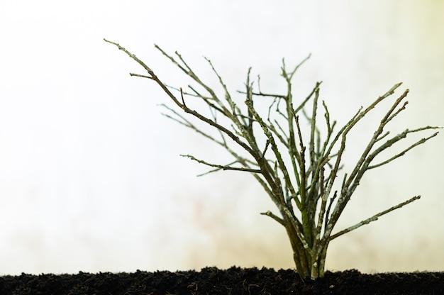 가뭄의 개념은 나무를 죽게합니다
