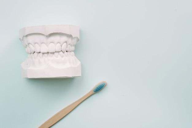 Понятие о том, как правильно чистить зубы. бамбуковая зубная щетка лежит на синем фоне и рядом с гипсовой моделью человеческой челюсти. уход за полостью рта ортодонт.