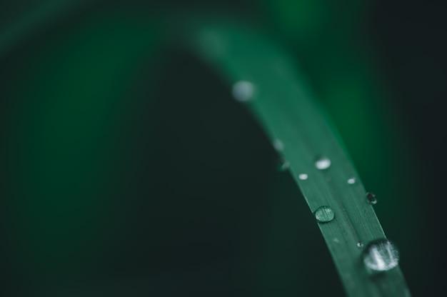 世界の緑の環境が大好きのコンセプト葉に水滴がぼやけて背景のボケ味