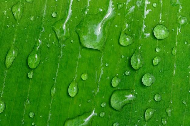 Концепция любви мир зеленой окружающей среды капли воды на листьях размытый фон боке
