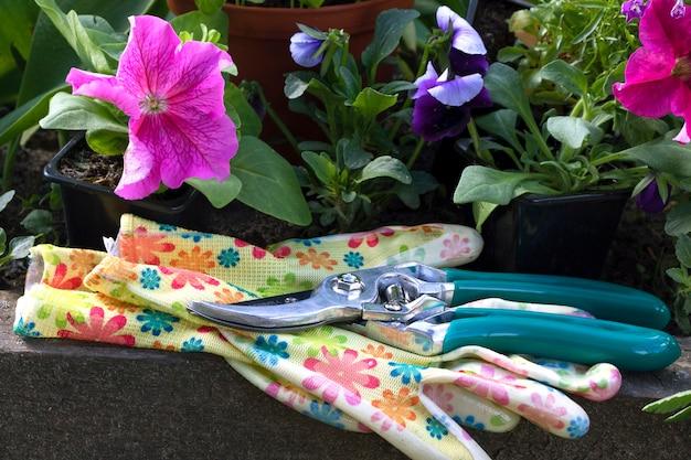 植物の世話、移植、苗の剪定、庭と庭でのガーデニングの概念