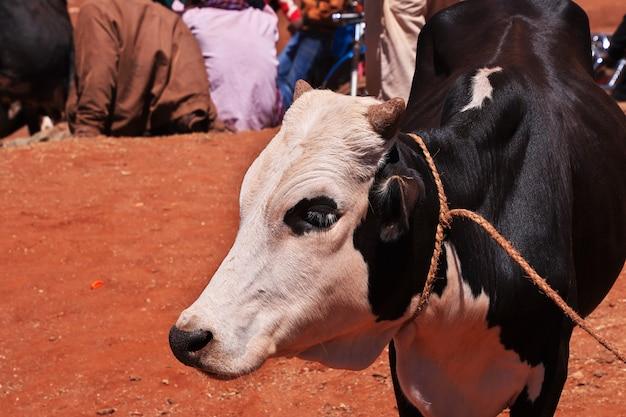 タンザニアの地元市場の牛