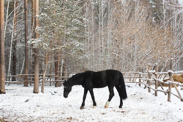 雪の中のカラスの馬