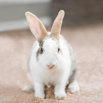 Милый белый кролик на земле