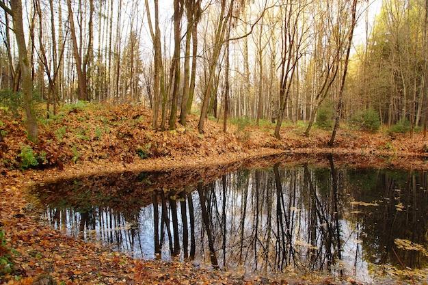 小さな湖の暗い広がりは、岸にあるオレンジ色の秋の森を反映しています。