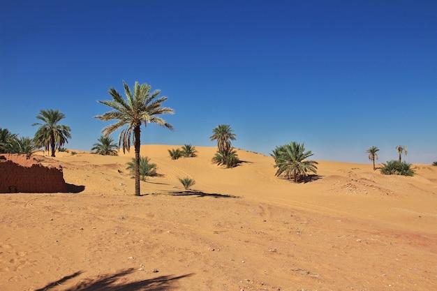 ティミムンのナツメヤシの木は、アルジェリアのサハラ砂漠で放棄された都市 Premium写真