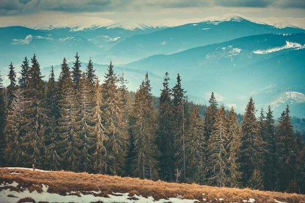 ウクライナのカルパティア山脈の中心であるブコベルの密な針葉樹林。手つかずの野生の自然の美しさと強さ。山脈を背景にした秋冬の風景