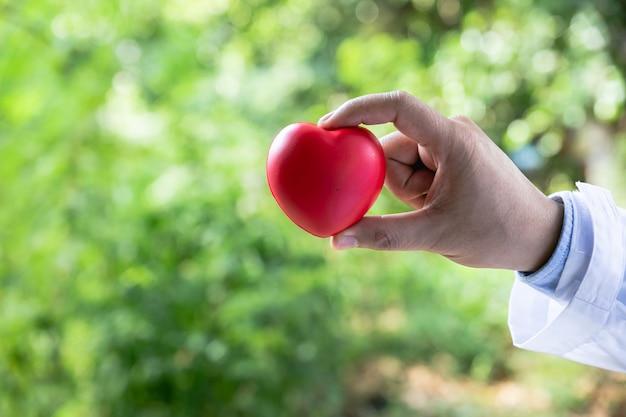 医者は赤いハートを保持して見せています。トピックのコンセプト:健康、サポート、国際または国内の心臓病の日。