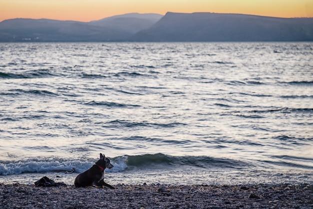 Собака и закат на берегу галилейского озера тивериадское, кинерет
