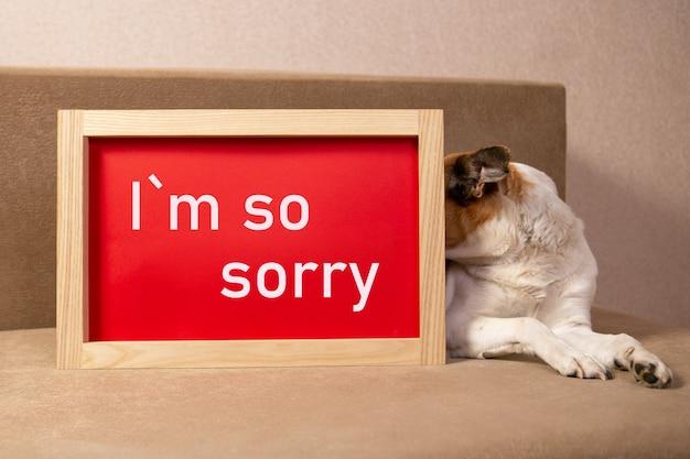 犬は赤いポスターの後ろに隠れて、ごめんなさいと言っています